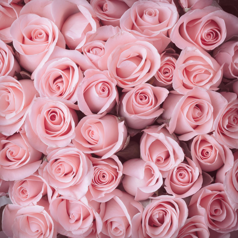 Fleuriste Mahonia
