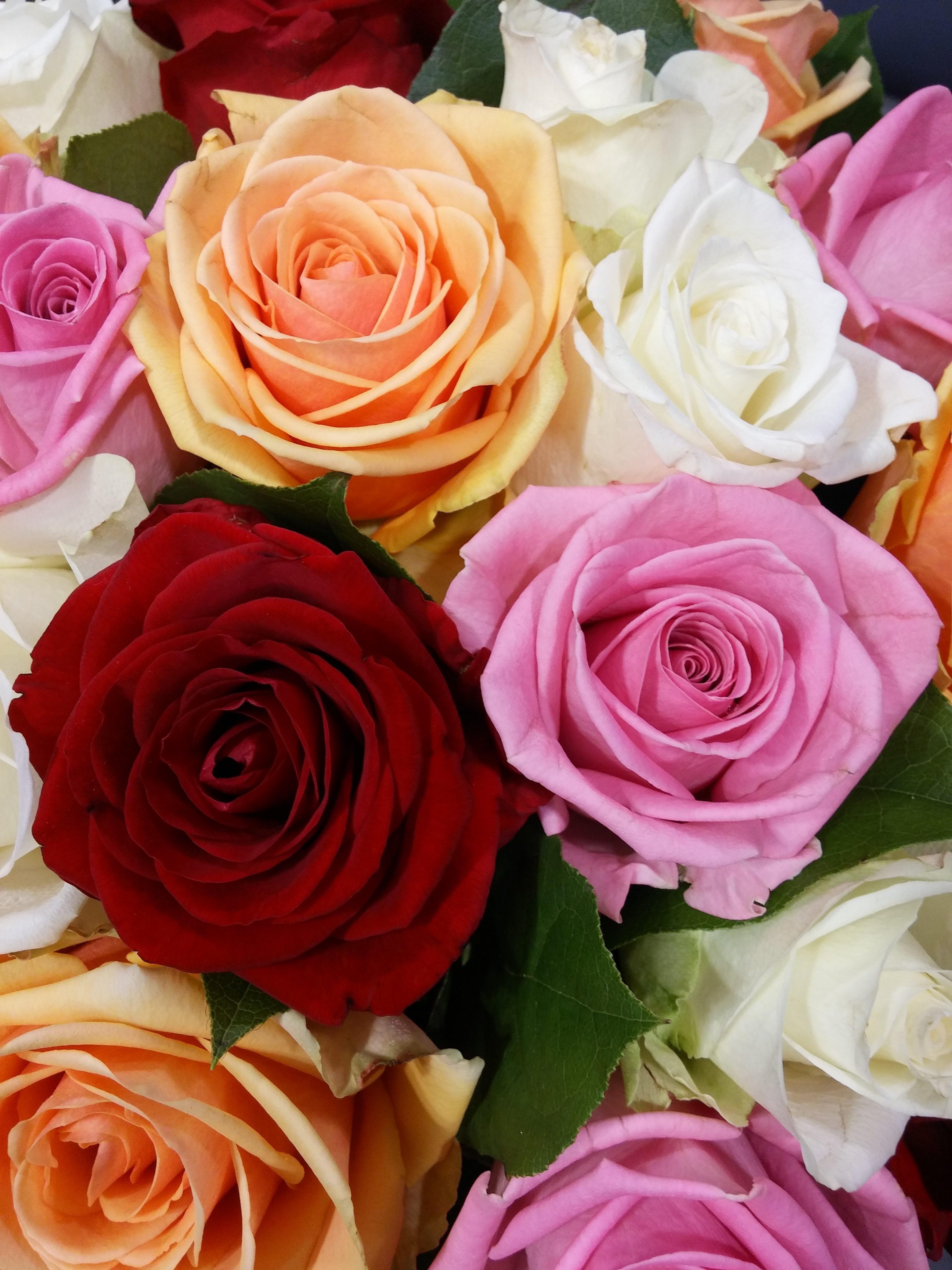 Combien De Rose Pour La St Valentin legal notice